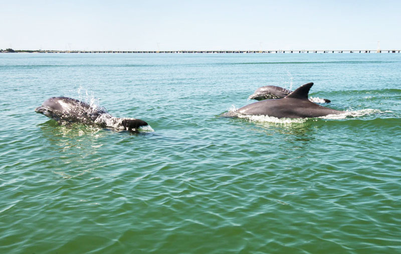 Dolphin Sightseeing | FishyBizness Fishing Charters & Boat Tours in Naples, Florida